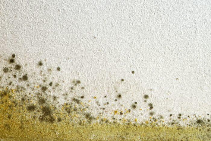 schimmel aan muur onderkant